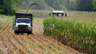 Europas Acker werden gepflügt für höchst umstrittenen Genmais