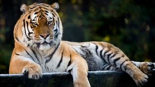 Einzigartige Zwangsräumung des Raubtierparks Subingen vertagt