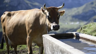 Was für eine Landwirtschaft will die Schweiz?