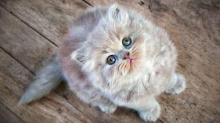 Hunde müssen seit 13 Jahren gechippt sein. Nicht so Katzen. Dabei nehmen gerade diese Tiere gerne einmal Reissaus.