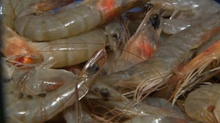 Crevetten mit resistenten Keimen belastet
