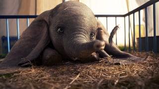 «Dumbo»: Zu viele Menschen, zu wenig Elefäntchen