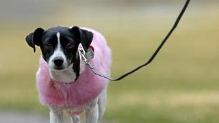 Immer mehr Hunde, immer mehr Konflikte