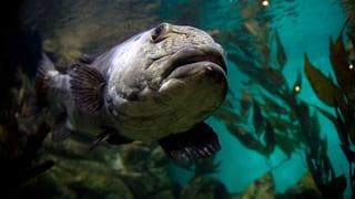 Diesen Meeresfischen geht es besonders schlecht