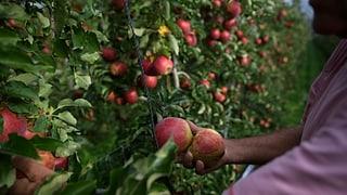 Puspè pesticids vi da maila biologica en il Tirol dal Sid
