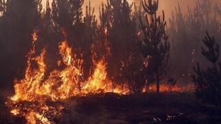 Waldbrände in der Grösse des Kantons Zürich