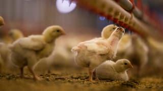 Antibiotikaresistenz: «Der Bund ist zu zögerlich»