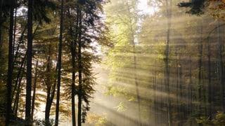 «Das Geheimnis unseres Waldes»