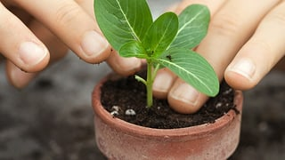 Gartenerde geht auch ohne Torf