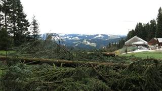 Holzpreis stabil - wenn sich die Waldbesitzer beeilen