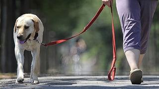 In Basel müssen Hunde nicht mehr zittern am Nationalfeiertag
