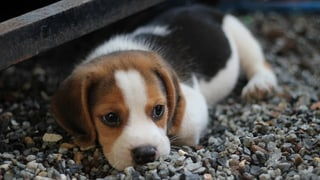 Streunender Hund am Ferienstrand (Artikel enthält Video)