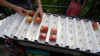 Uns gehen Äpfel und Birnen aus