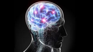 Stimmen im Kopf sichtbar machen Die Stimmen im Kopf lassen sich sichtbar machen, aber nicht belauschen