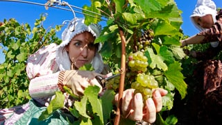 Frankreichs Wein – dank Nachhilfe aus Italien