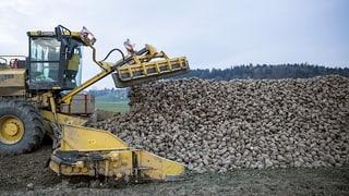 Zuckerrübenproduzenten leiden unter Preisdruck