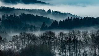 Aargauer Regierungsrat lehnt Wald-Initiative ab
