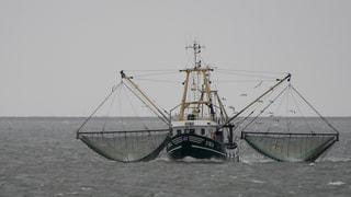 Weltweiter Fischkonsum steigt