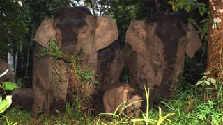 Wenn Elefanten zu Zwergen werden