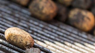 Nasses Wetter gefährdet die Kartoffelernte