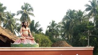 Die Suche nach Sinn und Wahrheit unter tropischen Bäumen