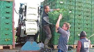 Bauern um den Bodensee sollen besser zusammenarbeiten