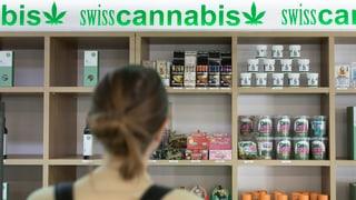 Cannabis-Firmen schiessen ins Kraut
