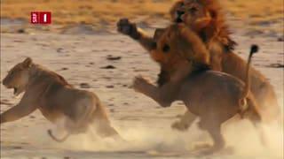 Von der Kalahari bis zum Kap – durchs wilde Afrika