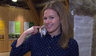 Video «Serie «Tierische Einwanderer»: Ratten» abspielen