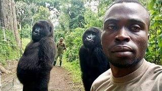 Lächeln bitte! Dieses Gorilla-Selfie geht um die Welt