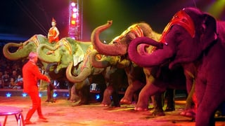 Grünes Licht für Elefantennummer im Zirkus Knie