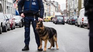 Anschläge von Paris und Brüssel: Wie gross ist die Terrorzelle?