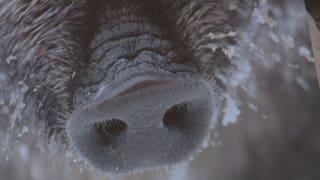 Selvaschina bada la midada dal clima