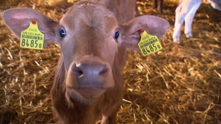 Antibiotika im Tierstall – ein Risiko für den Menschen
