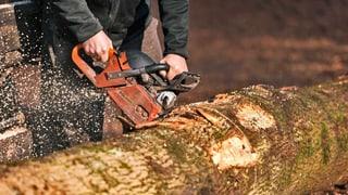 Asiaten wollen mehr Schweizer Holz