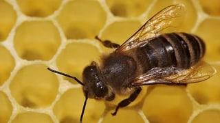 Weniger Pflanzenschutzmittel hilft den Bienen