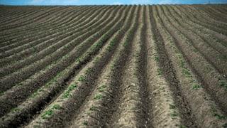 Sie haben keinen Mist: Ackerbauern sollen Boden besser pflegen