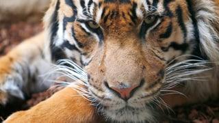 Wie wichtig sind Tiger, Löwe und Co?