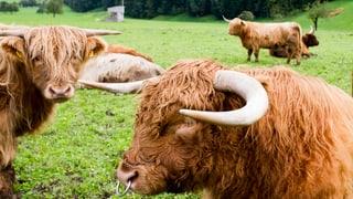 Braucht es eine Datenbank für Tier-Antibiotika?