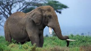 Schlafen im Tierreich: Vom Kurz- bis zum Langschläfer