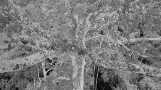 Der Urwald steht Kopf (Artikel enthält Audio)