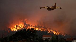 Chametg ha chaschunà incendi da guaud en il Portugal
