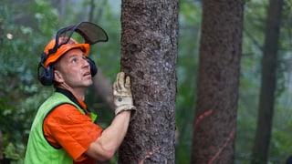 16 Millionen Franken für den Aargauer Wald gefordert