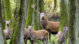 Jagd erstmals auch im Jagdbanngebiet Säntis
