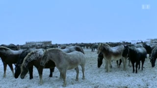 Quälerei auf Pferdefarmen