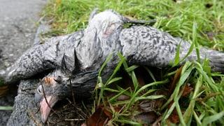 Vogelgrippe-Virus in Birsfelden nachgewiesen