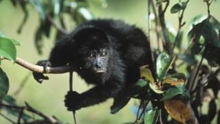 Video «Animal Camera: Hightech im Dschungel (1/3) » abspielen