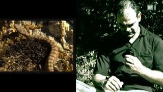 Was tun bei einem Giftschlangenbiss?