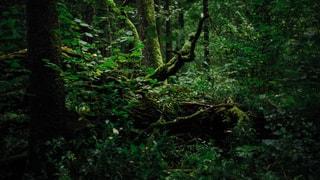 Der Kampf um den letzten Urwald Europas