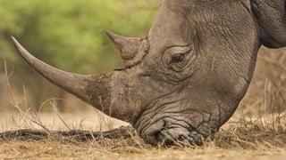 «Grösstes Artensterben seit Verschwinden der Dinosaurier»